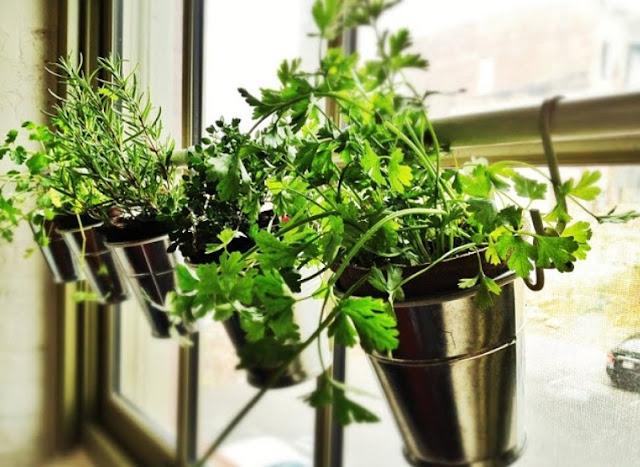 plant pot display ideas