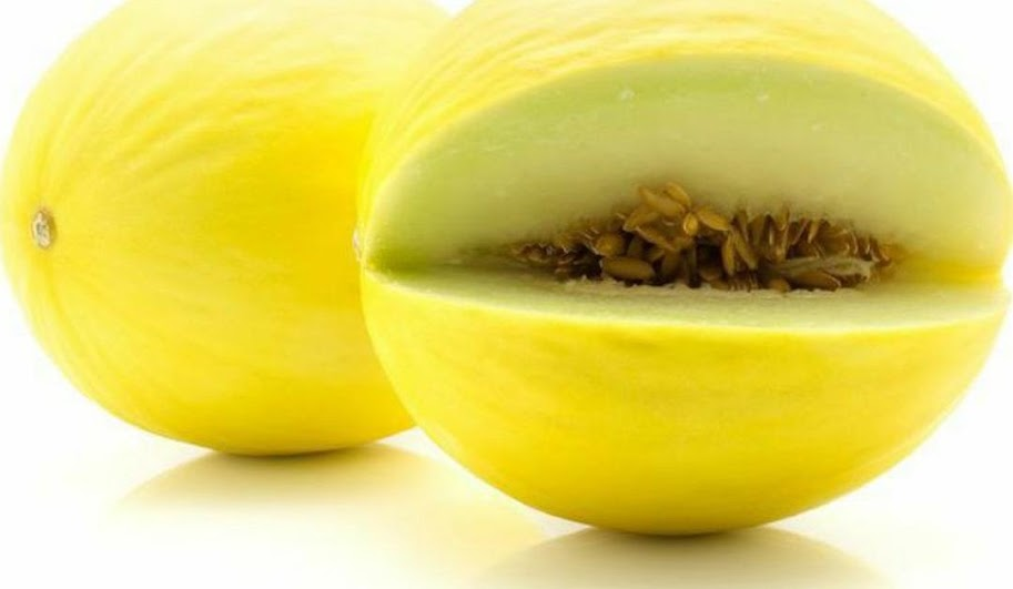 Benih Buah Melon Golden Canary Daily Farm Nusa Tenggara Barat