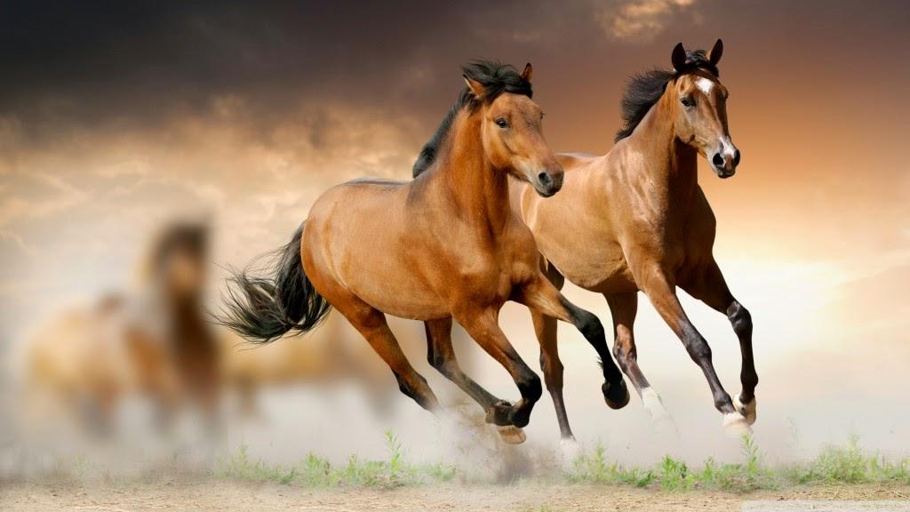 Horse Wallpaper Wallpapers