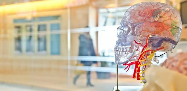 Perbedaan Utama Antara Anatomi dan Fisiologi