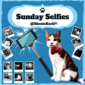 BBHQ The B Team Sunday Selfies @BionicBasil ®