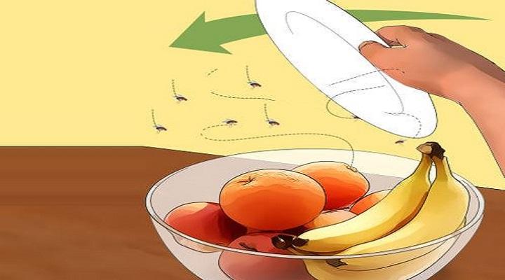Comment se debarrasser des mouches a l exterieur - Comment se debarrasser des araignees a l exterieur ...