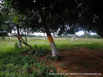 DTCP Approved Madurantakam Plots - Thanigai Estate #7