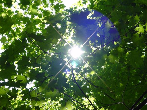 The Conscious Kitchen: Chlorophyll: The Blood of Plants