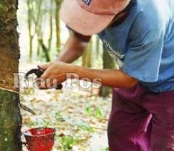 Tips Paling Ampung Menghilangkan Bau Getah Karet