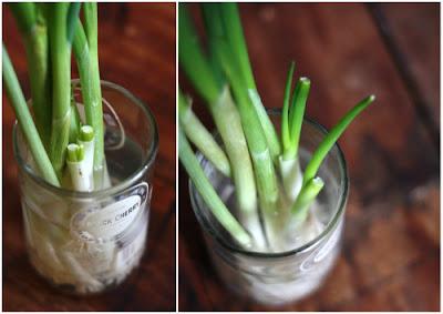 How to grow fresh green onions ah home