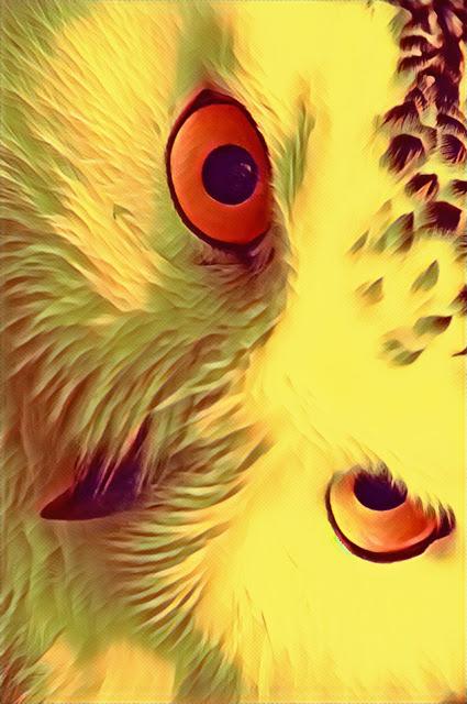 águia-olhos-de-águia-wallpaper-celular