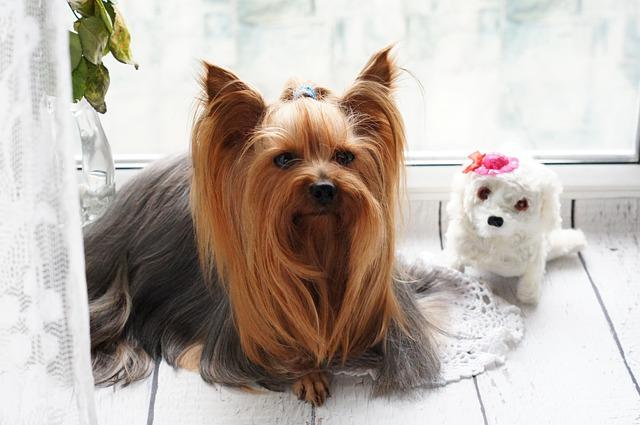 dog_grooming_near_me