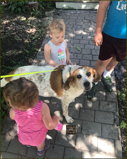 Dog and Kids, Gentle Spirits All