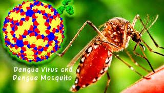 Dengue virus and dengue mosquito