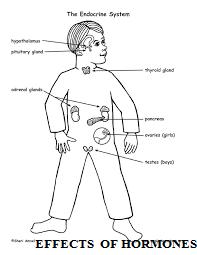 EFFECTS  OF HORMONES