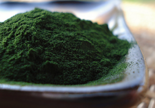 Chlorella sp