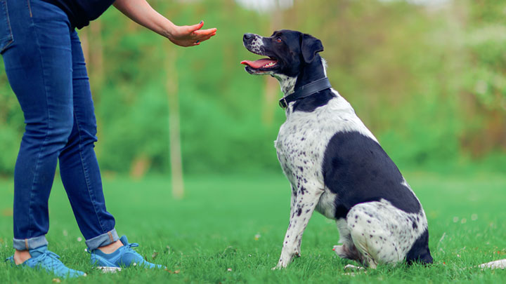 12 terrible dog training mistakes