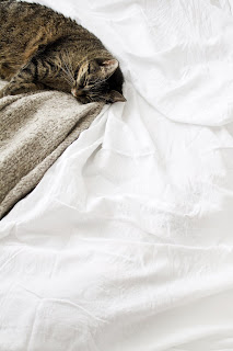 CAT GOOD NIGHT