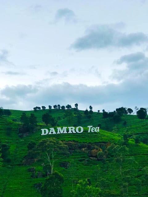 තේ යායක් මැද දිදුළන - දම්රෝ ටී (DAMRO Tea) 🌱🍃🌱 - Your Choice Way