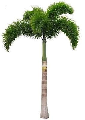 tanaman untuk taman