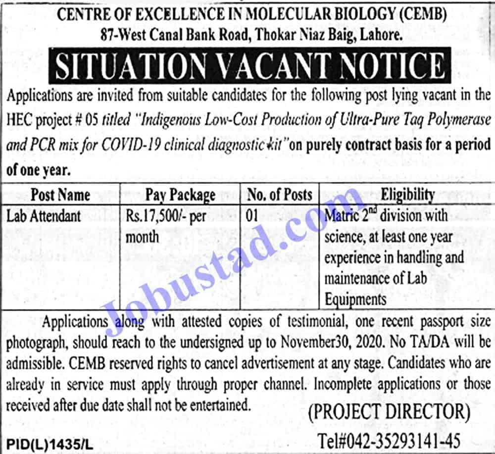 Jobs in University of Punjab Nov 2020