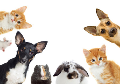 An assortment of animals looking directly at the camera, including: two dogs, two cats, a bunny, a guinea pig, and a mouse.