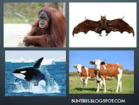 soal un biologi tentang kingdom animalia