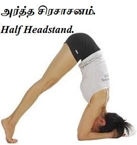 அர்த்த சிரசாசனம் - Artha Sirsasana - Half Headstand.