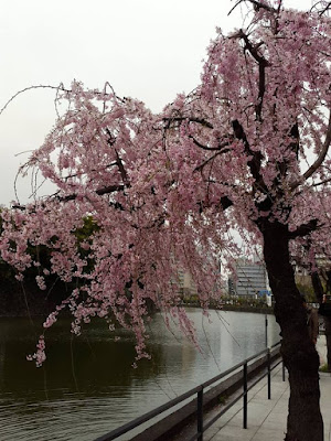 The moat outside the East Gardens of Imperial Palace Tokyo