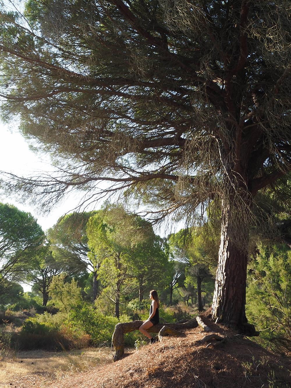 Jabalina Country Tents: Glamping en la Dehesa de las Yeguas de Cádiz_5