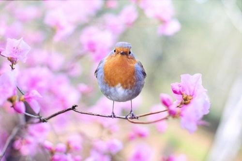 Pássaro, flores, primavera. #PraCegoVer