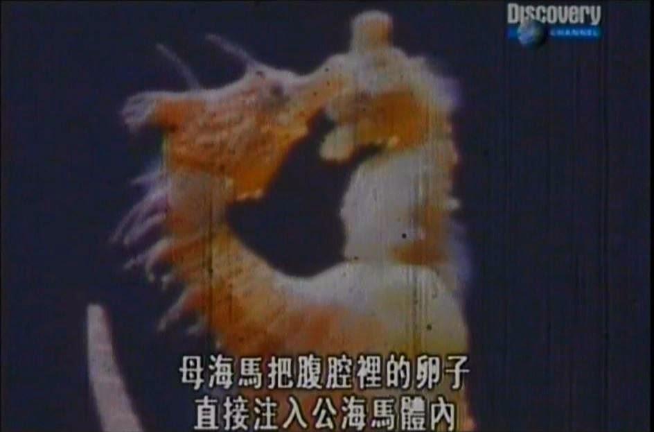江芳銘的中學生物講堂: 海馬的卵到底是體內受精還是體外受精?