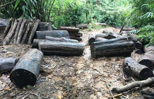 Rừng phòng hộ ở Lâm Đồng bị tàn phá