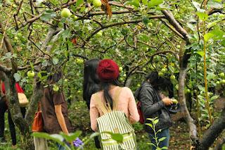 Wisata Kusuma Agrowisata