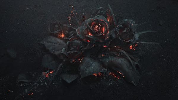 wallpaper mawar hitam hd