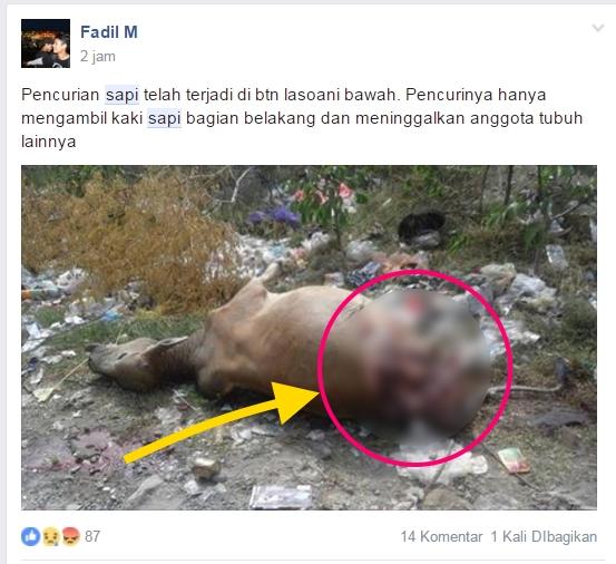 pencurian sapi dengan cara dimutilasi