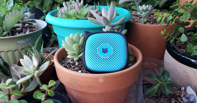 A group of succelents with a blue Relay Go device sitting amongst the succulents.