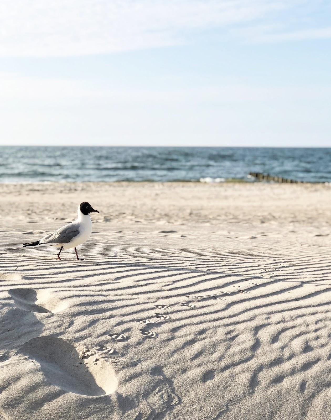 Ulubieńcy maja: wyjazdy, piknik, rower i kaszmirowy sweter za 3 zł