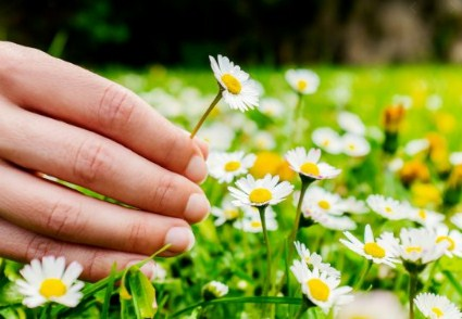 Penjelasan Arti Mimpi Memetik Bunga Menurut Primbon Jawa