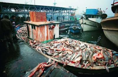 Independenta Faciası sonrası Marmara Denizinde balıklar ve İstanbul'da balık satışları...