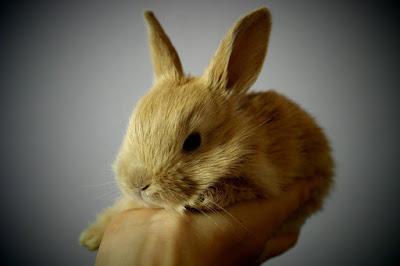 Anak kelinci imut