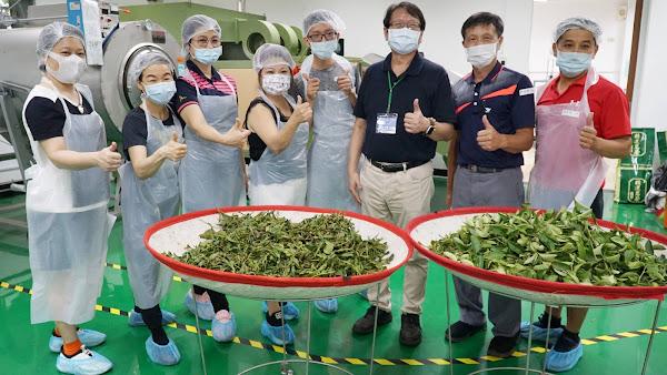 製茶證照術科輔導班開設 大葉大學培育茶人才