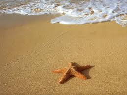 Bir Deniz Yıldızı Hikayesi