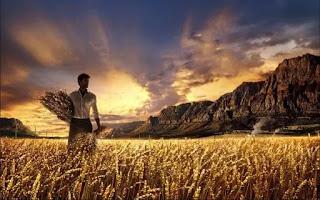estudo bíblico semeadura e colheita