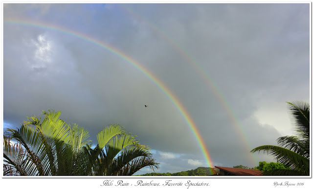 Hilo Rain: Rainbows. Favorite Spectators.