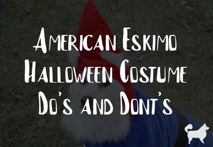 American Eskimo Halloween Costume Do's and Dont's