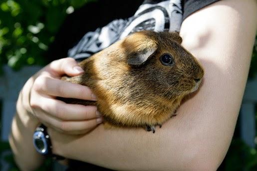Pokarmy Nestor dla gryzoni i królików
