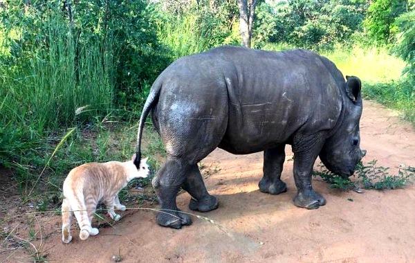 baby rhino pics