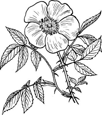 kolorowanki do druku kwiaty