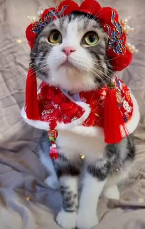 Yuk intip pakaian tradisional tiongkok yang dikenakan oleh hewan berkaki empat ini