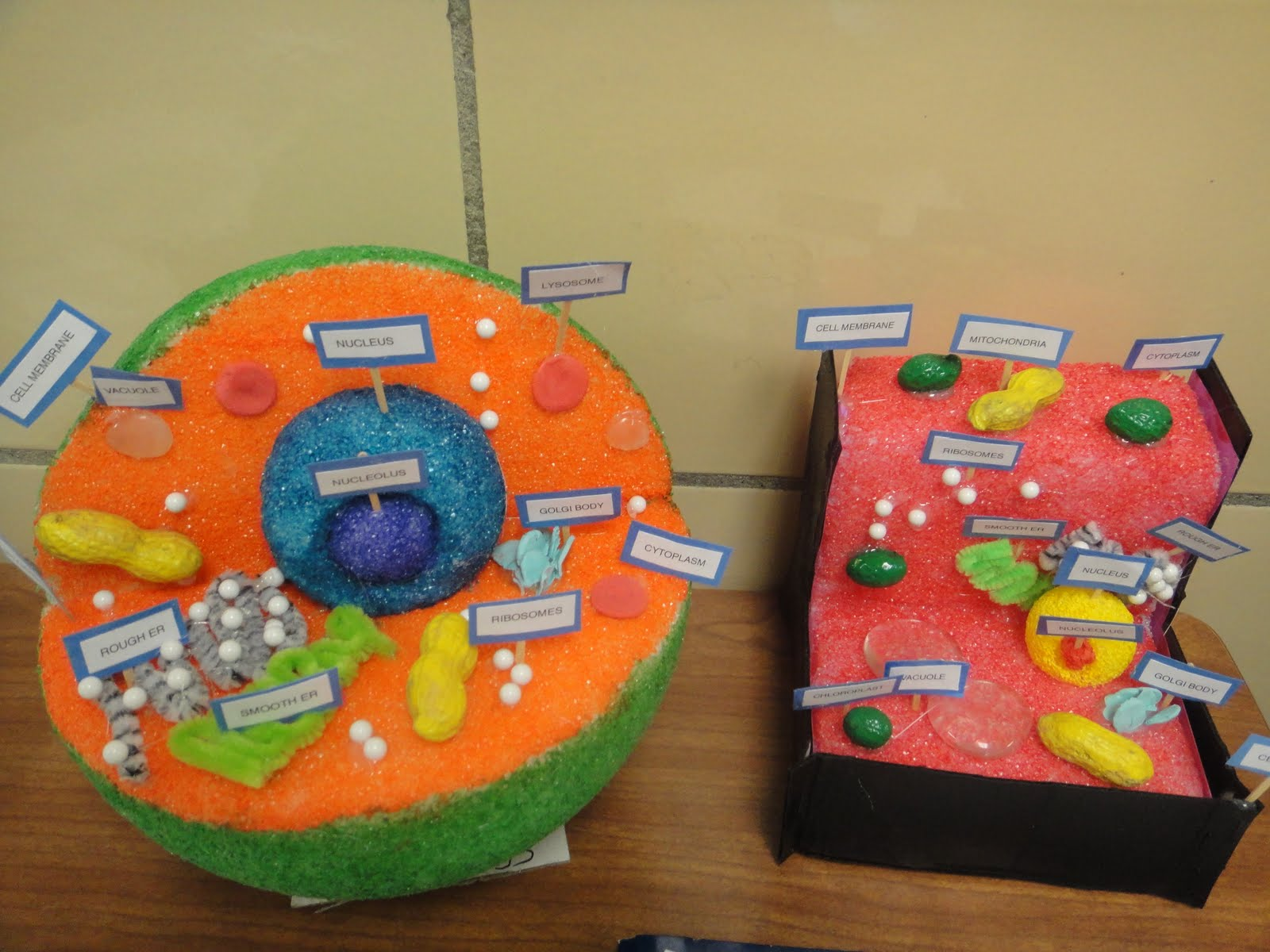 Plant Cell Model Labeled Project