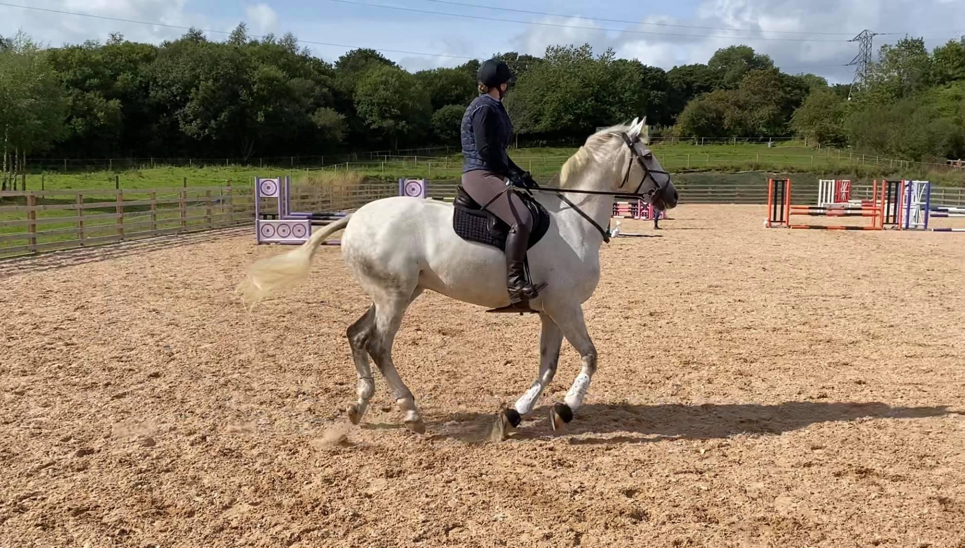Team Tunnah Equestrian Showjumping Training