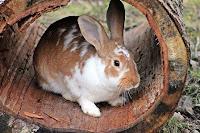 biaya ternak kelinci, bisnis ternak kelinci, usaha ternak kelinci, biaya modal ternak kelinci, biaya bisnis ternak kelinci, ternak kelinci, kelinci ternak, rincian modal usaha ternak kelinci
