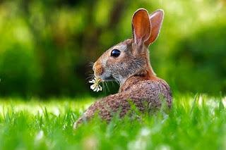 Peluang usaha budidaya ternak kelinci